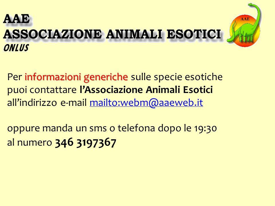 informazioni generiche Per informazioni generiche sulle specie esotiche puoi contattare l'Associazione Animali Esotici all'indirizzo e-mail mailto:webm@aaeweb.itmailto:webm@aaeweb.it oppure manda un sms o telefona dopo le 19:30 al numero 346 3197367