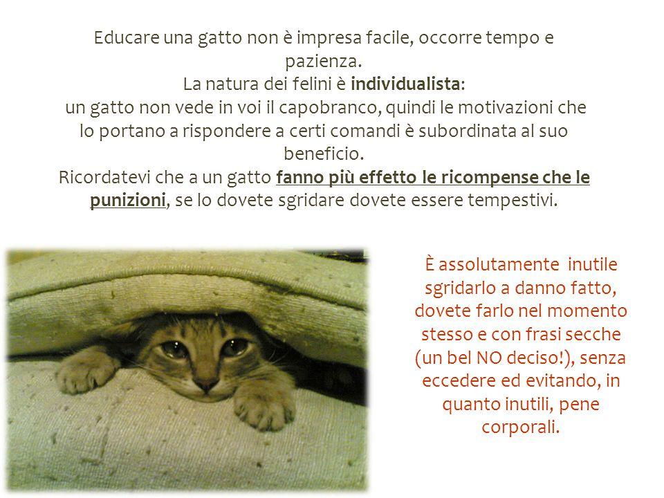 Educare una gatto non è impresa facile, occorre tempo e pazienza. La natura dei felini è individualista: un gatto non vede in voi il capobranco, quind
