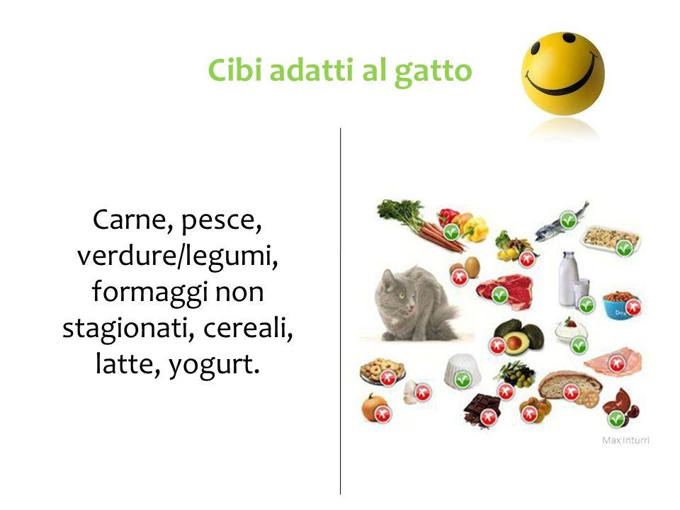 Cibi adatti al gatto Carne, pesce, verdure/legumi, formaggi non stagionati, cereali, latte, yogurt. Max Inturri