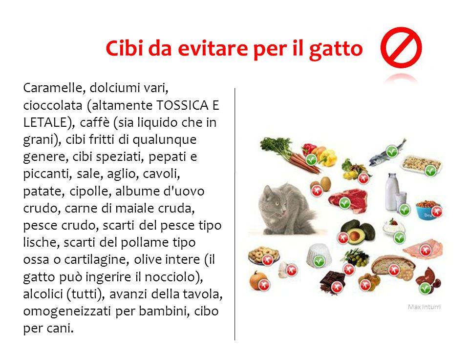 Cibi da evitare per il gatto Caramelle, dolciumi vari, cioccolata (altamente TOSSICA E LETALE), caffè (sia liquido che in grani), cibi fritti di qualu