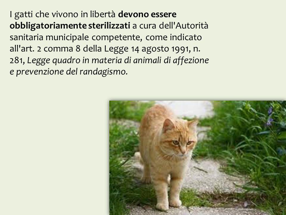 I gatti che vivono in libertà devono essere obbligatoriamente sterilizzati a cura dell'Autorità sanitaria municipale competente, come indicato all'art