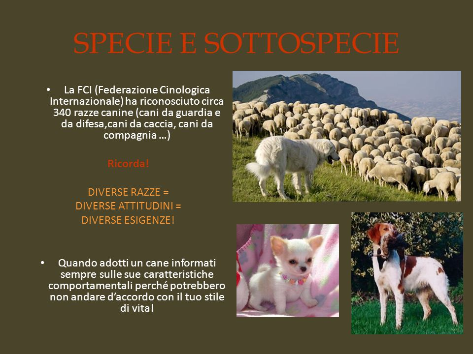 SPECIE E SOTTOSPECIE La FCI (Federazione Cinologica Internazionale) ha riconosciuto circa 340 razze canine (cani da guardia e da difesa,cani da caccia, cani da compagnia …) Ricorda.