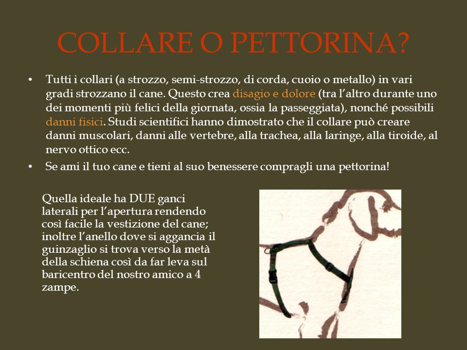 COLLARE O PETTORINA.