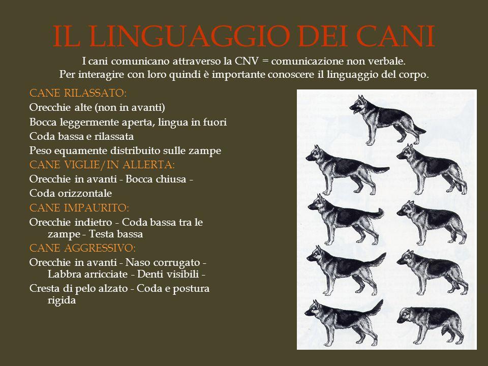 IL LINGUAGGIO DEI CANI I cani comunicano attraverso la CNV = comunicazione non verbale. Per interagire con loro quindi è importante conoscere il lingu