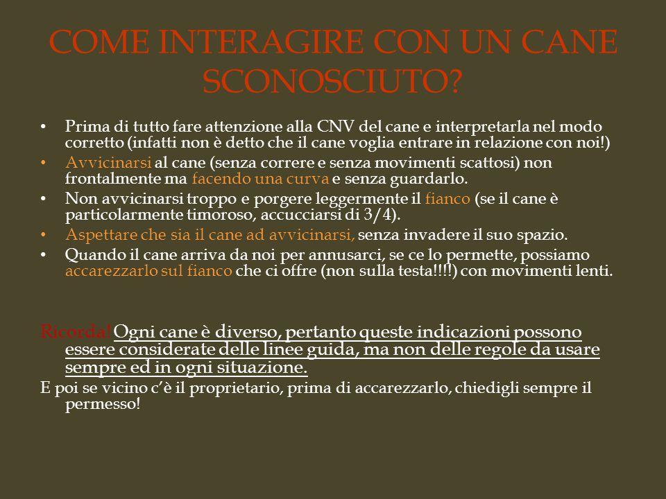 COME INTERAGIRE CON UN CANE SCONOSCIUTO.