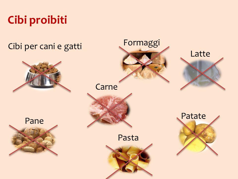 Cibi proibiti Pane Carne Pasta Patate Latte Formaggi Cibi per cani e gatti