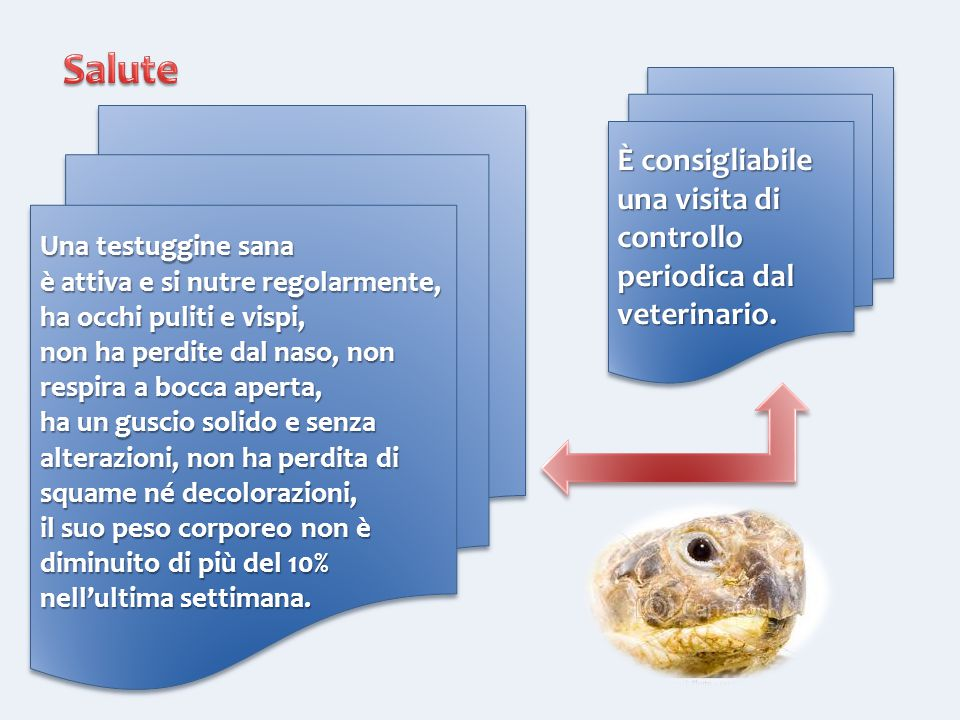 È consigliabile una visita di controllo periodica dal veterinario. Una testuggine sana è attiva e si nutre regolarmente, ha occhi puliti e vispi, non