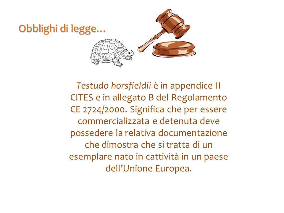 Obblighi di legge… Testudo horsfieldii è in appendice II CITES e in allegato B del Regolamento CE 2724/2000. Significa che per essere commercializzata