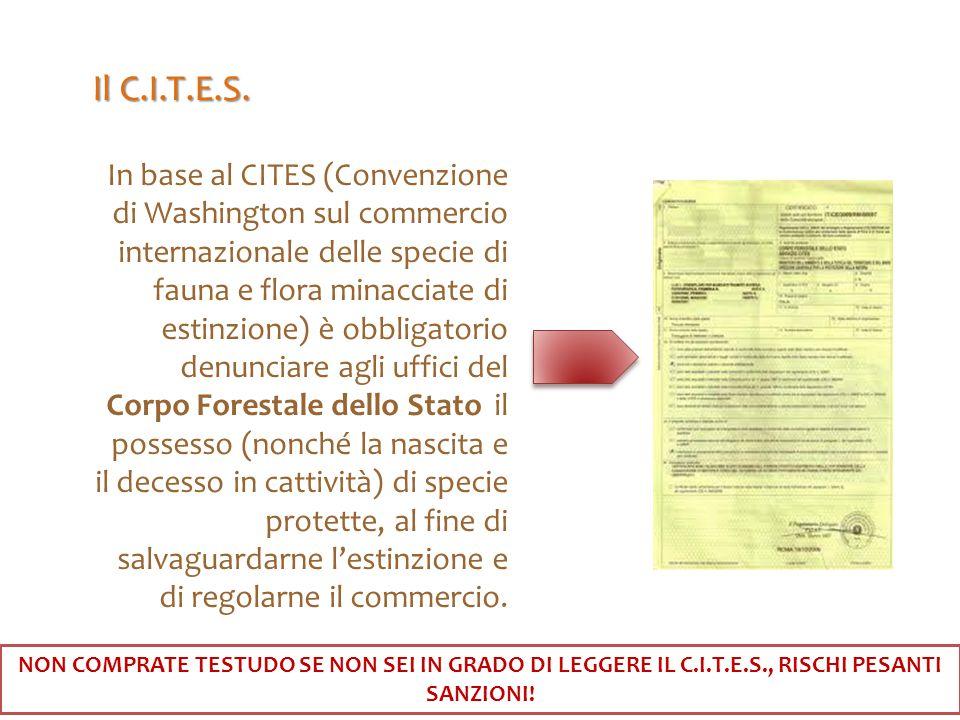In base al CITES (Convenzione di Washington sul commercio internazionale delle specie di fauna e flora minacciate di estinzione) è obbligatorio denunc