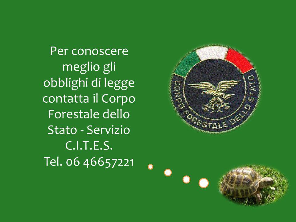 Per conoscere meglio gli obblighi di legge contatta il Corpo Forestale dello Stato - Servizio C.I.T.E.S. Tel. 06 46657221