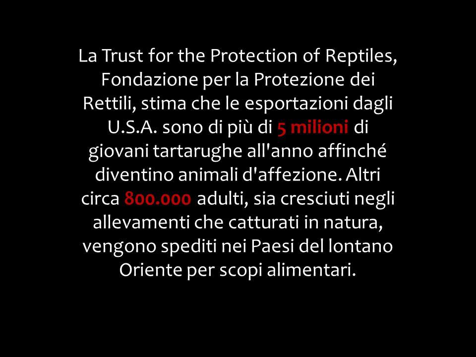 La Trust for the Protection of Reptiles, Fondazione per la Protezione dei Rettili, stima che le esportazioni dagli U.S.A. sono di più di 5 milioni di