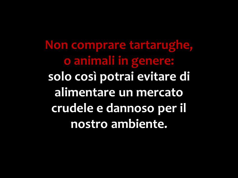 Non comprare tartarughe, o animali in genere: solo così potrai evitare di alimentare un mercato crudele e dannoso per il nostro ambiente.