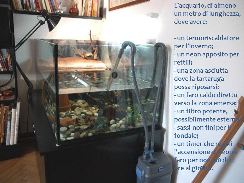 L'acquario, di almeno un metro di lunghezza, deve avere: - un termoriscaldatore per l'inverno; - un neon apposito per rettili; - una zona asciutta dov