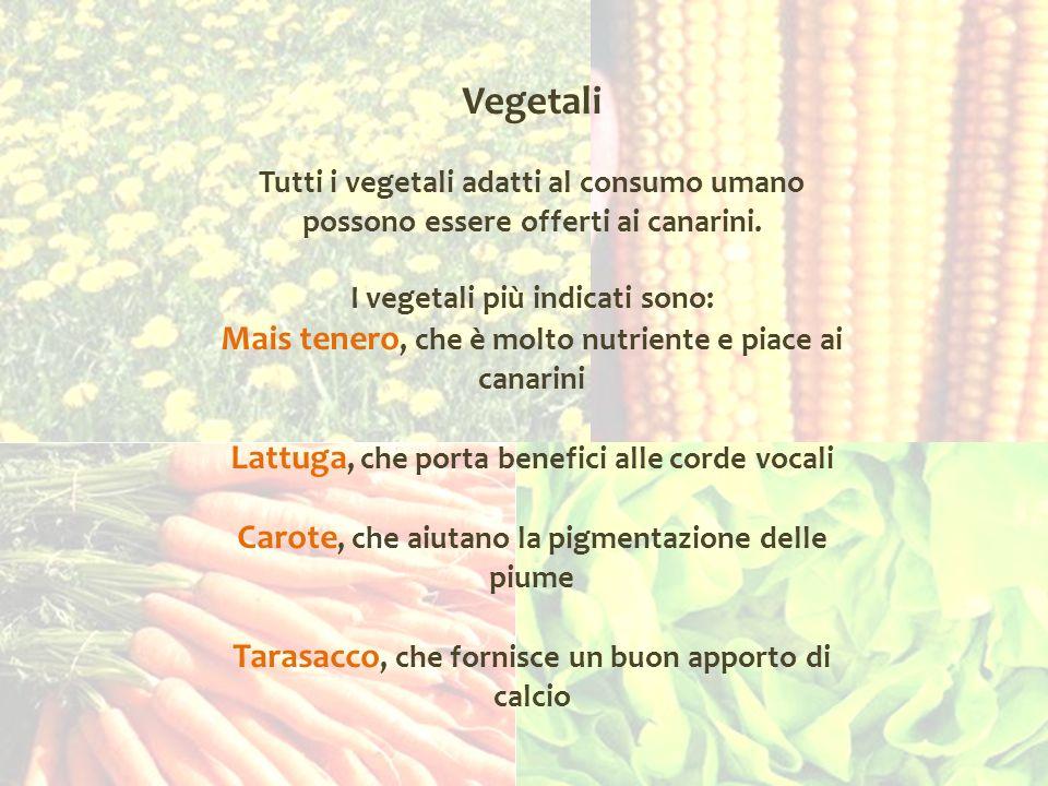 Vegetali Tutti i vegetali adatti al consumo umano possono essere offerti ai canarini. I vegetali più indicati sono: Mais tenero, che è molto nutriente