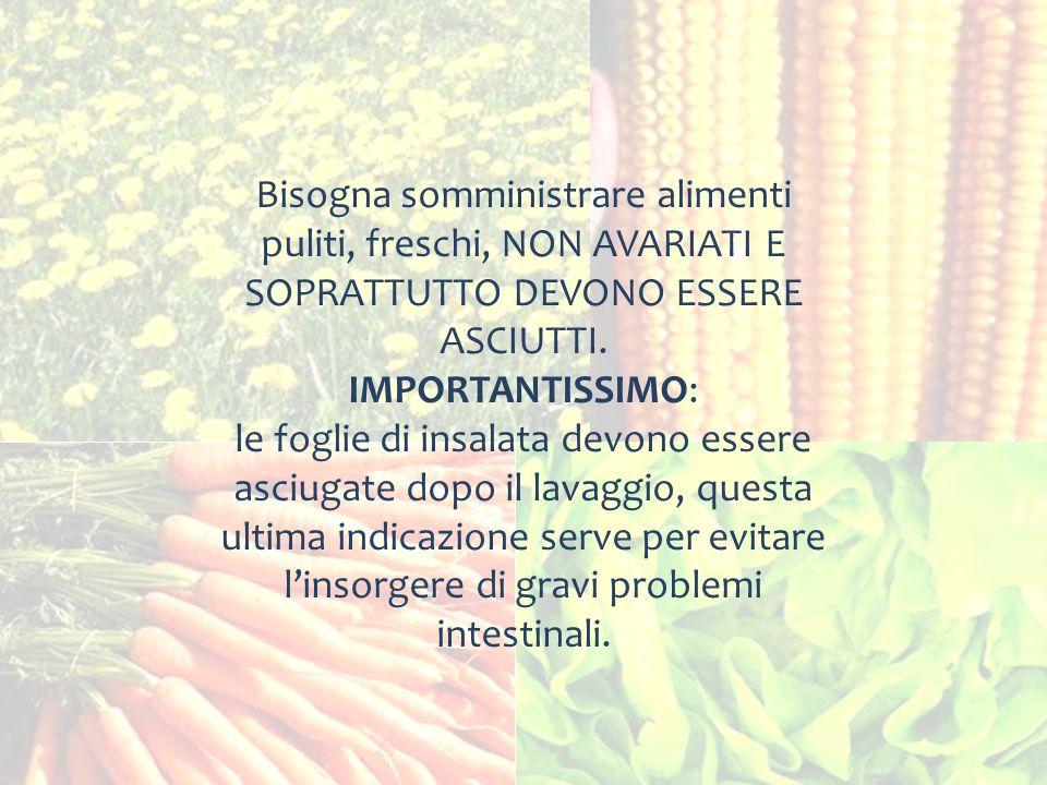 Bisogna somministrare alimenti puliti, freschi, NON AVARIATI E SOPRATTUTTO DEVONO ESSERE ASCIUTTI. IMPORTANTISSIMO: le foglie di insalata devono esser