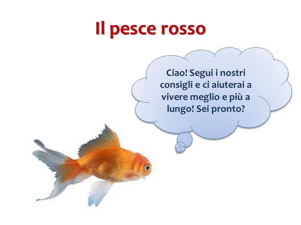 Il pesce rosso Ciao! Segui i nostri consigli e ci aiuterai a vivere meglio e più a lungo! Sei pronto?