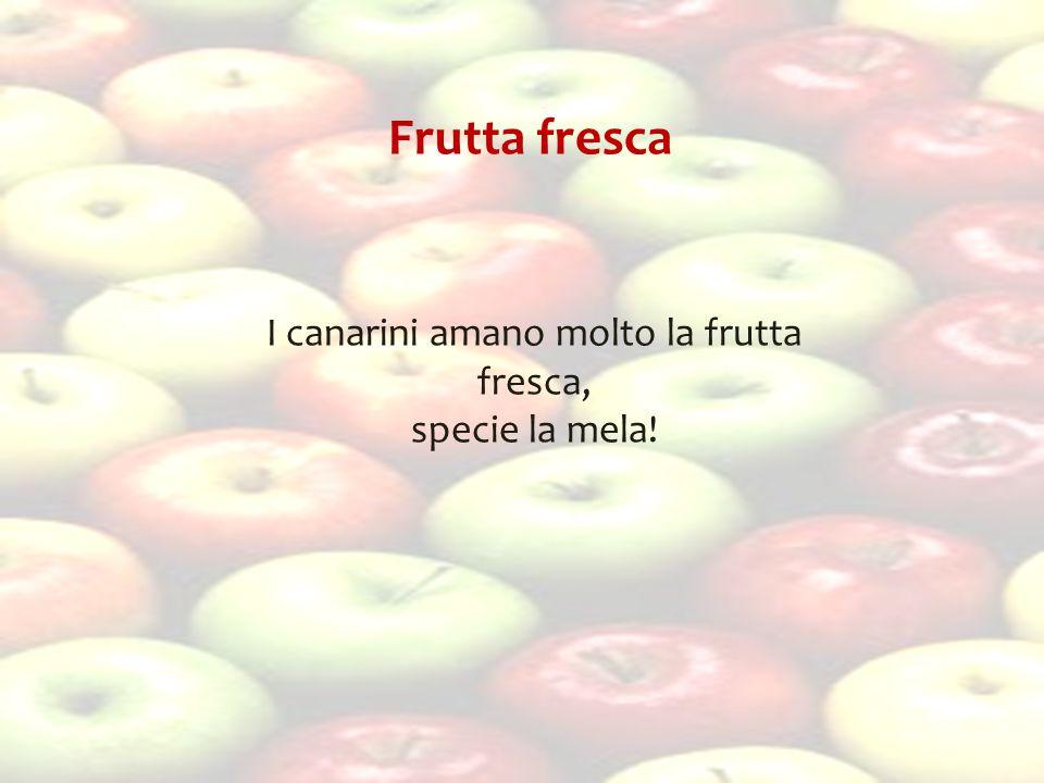 Frutta fresca I canarini amano molto la frutta fresca, specie la mela!