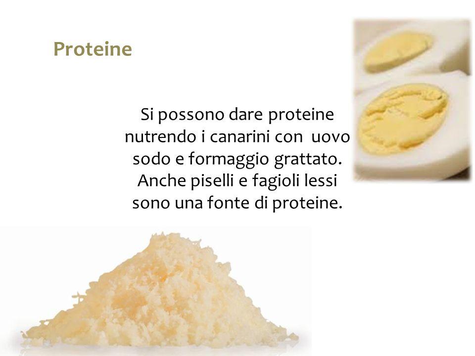 Si possono dare proteine nutrendo i canarini con uovo sodo e formaggio grattato. Anche piselli e fagioli lessi sono una fonte di proteine. Proteine