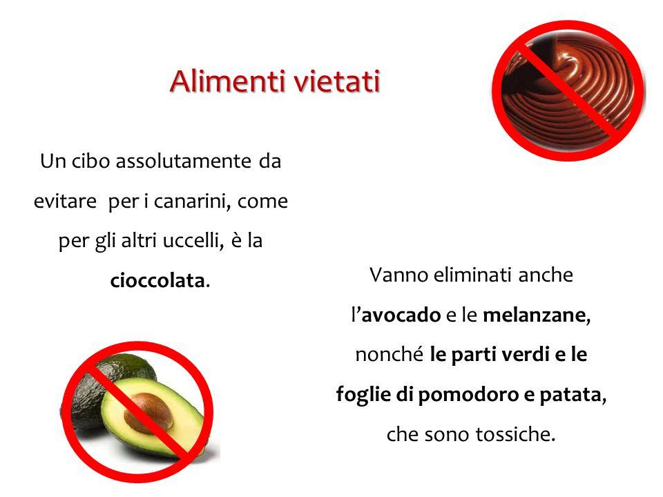 Un cibo assolutamente da evitare per i canarini, come per gli altri uccelli, è la cioccolata. Vanno eliminati anche l'avocado e le melanzane, nonché l
