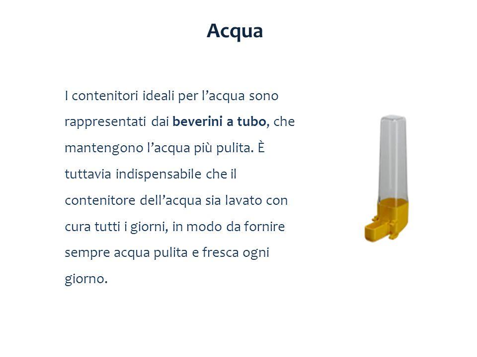 I contenitori ideali per l'acqua sono rappresentati dai beverini a tubo, che mantengono l'acqua più pulita. È tuttavia indispensabile che il contenito