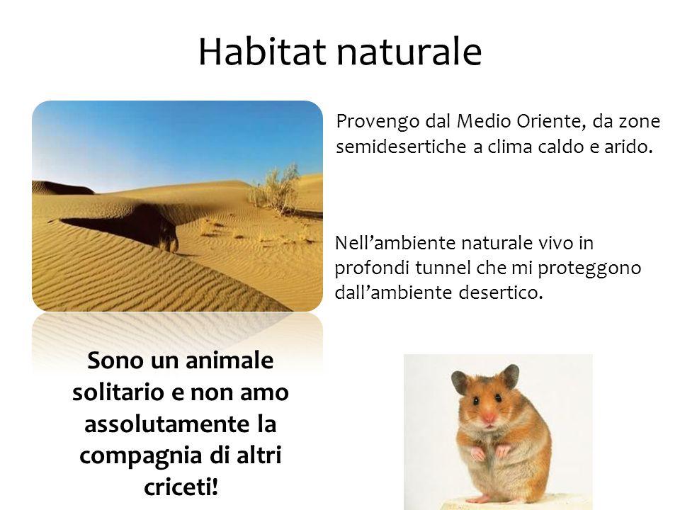 Habitat naturale Provengo dal Medio Oriente, da zone semidesertiche a clima caldo e arido. Nell'ambiente naturale vivo in profondi tunnel che mi prote