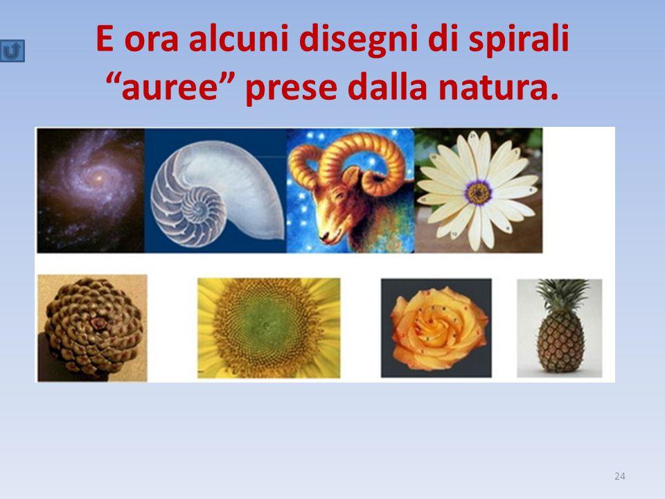 """E ora alcuni disegni di spirali """"auree"""" prese dalla natura. 24"""