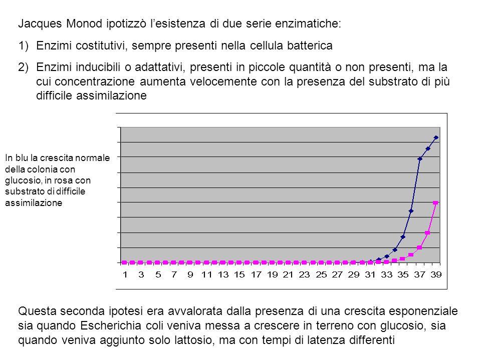 Jacques Monod ipotizzò l'esistenza di due serie enzimatiche: 1)Enzimi costitutivi, sempre presenti nella cellula batterica 2)Enzimi inducibili o adatt