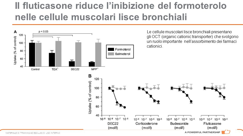 Il fluticasone riduce l'inibizione del formoterolo nelle cellule muscolari lisce bronchiali MATERIALE DI TRAINING AD ESCLUSIVO USO INTERNO Le cellule