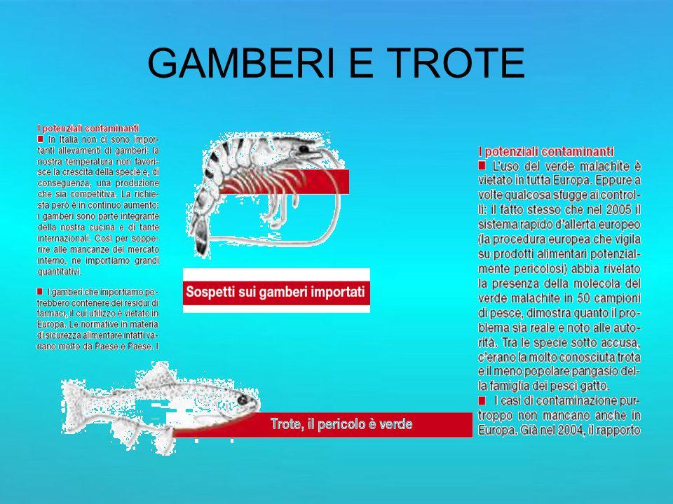 GAMBERI E TROTE
