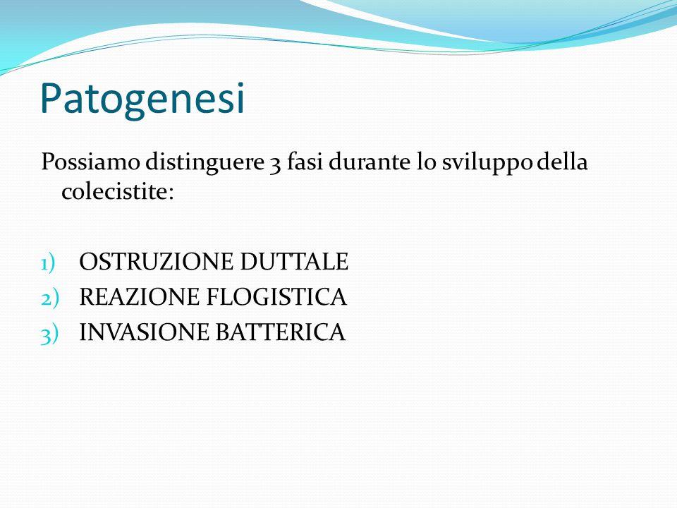 Patogenesi Possiamo distinguere 3 fasi durante lo sviluppo della colecistite: 1) OSTRUZIONE DUTTALE 2) REAZIONE FLOGISTICA 3) INVASIONE BATTERICA
