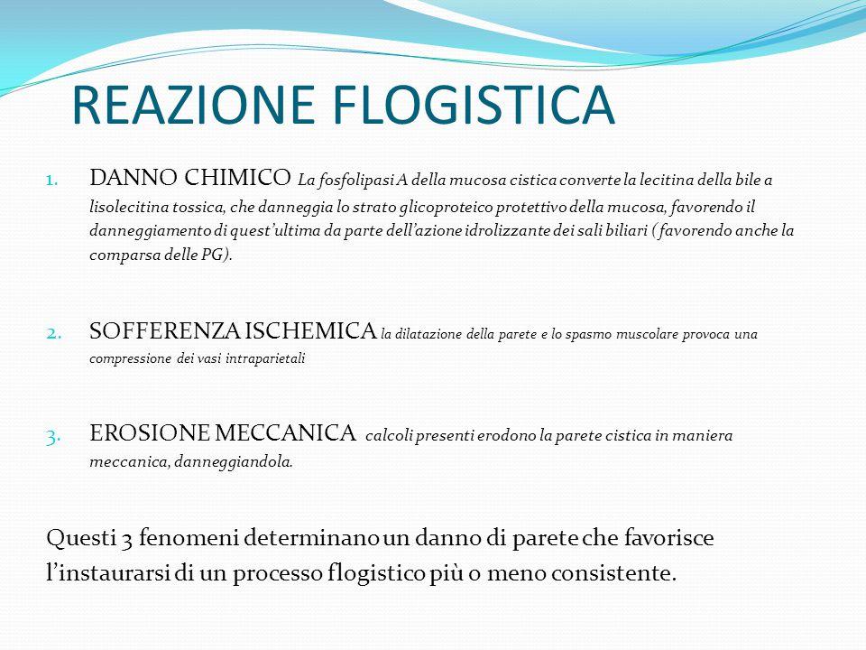 REAZIONE FLOGISTICA 1. DANNO CHIMICO La fosfolipasi A della mucosa cistica converte la lecitina della bile a lisolecitina tossica, che danneggia lo st