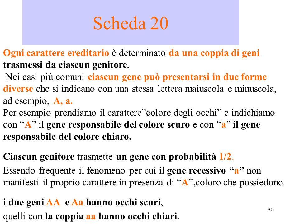 80 Scheda 20 Ogni carattere ereditario è determinato da una coppia di geni trasmessi da ciascun genitore. Nei casi più comuni ciascun gene può present