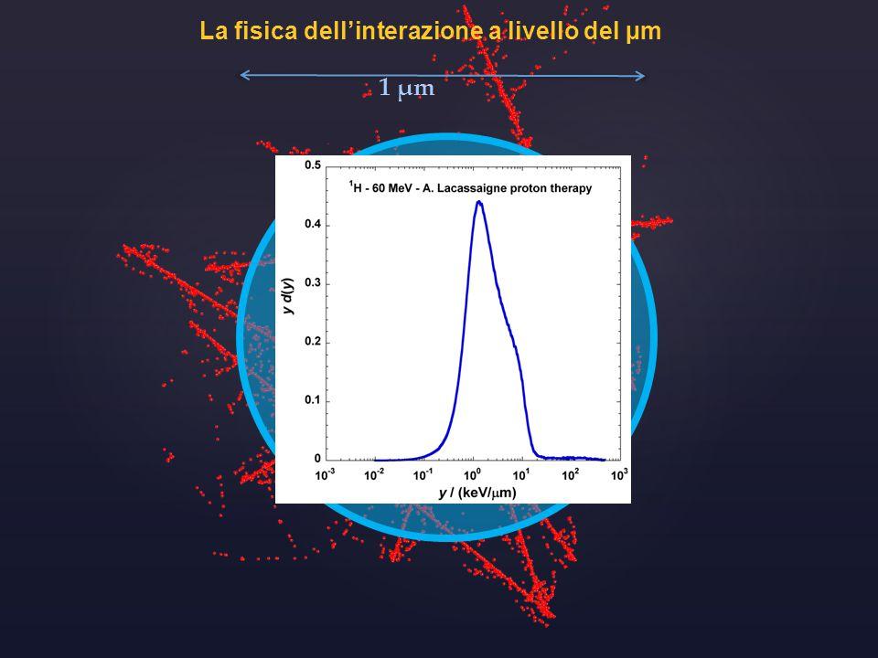 La fisica dell'interazione a livello del µm 1 µm