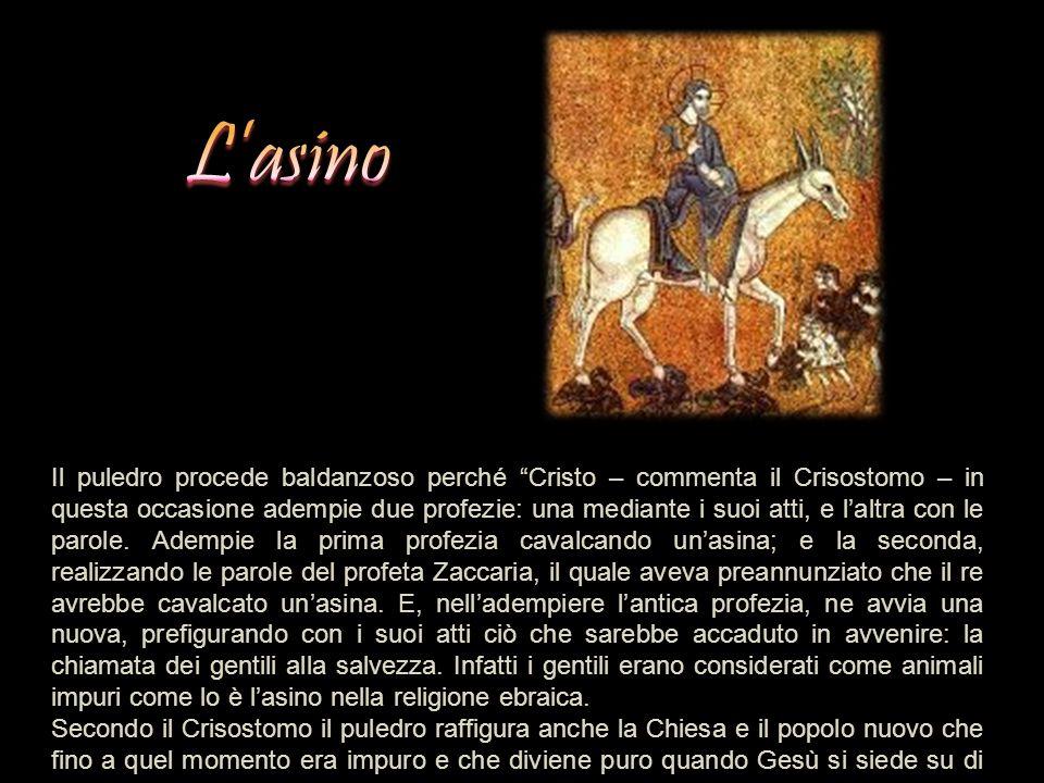 """Il puledro procede baldanzoso perché """"Cristo – commenta il Crisostomo – in questa occasione adempie due profezie: una mediante i suoi atti, e l'altra"""