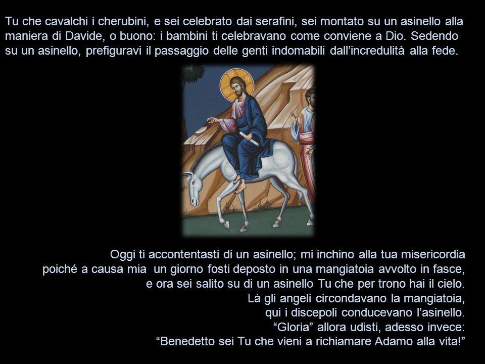 Tu che cavalchi i cherubini, e sei celebrato dai serafini, sei montato su un asinello alla maniera di Davide, o buono: i bambini ti celebravano come conviene a Dio.