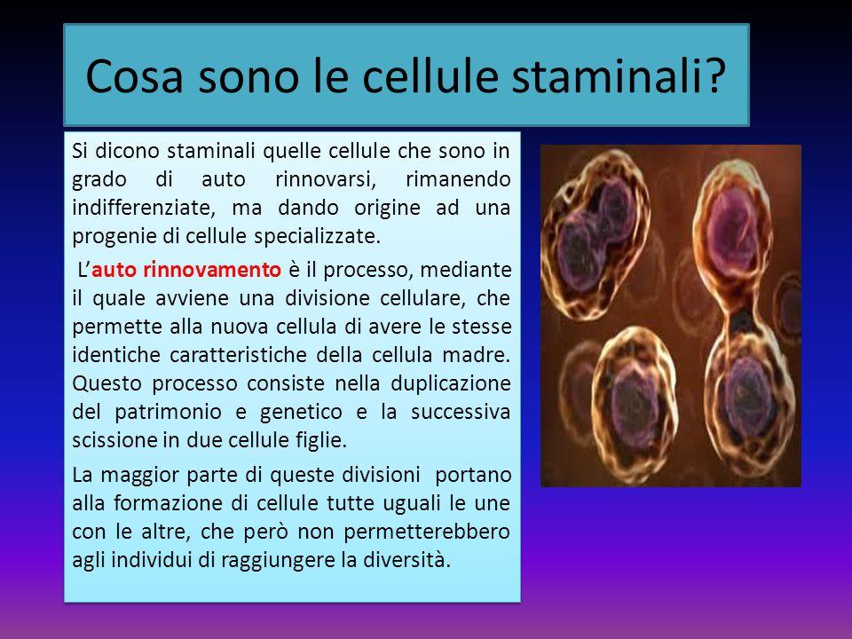 Il differenziamento Il differenziamento è la trasformazione che porta una cellula giovane ad acquisire determinate caratteristiche specifiche (diverse da quelle della cellula madre).