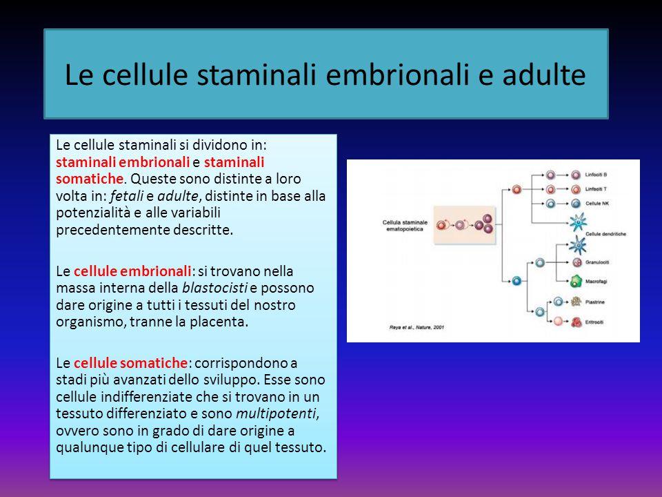 Le cellule staminali embrionali e adulte Le cellule staminali si dividono in: staminali embrionali e staminali somatiche.