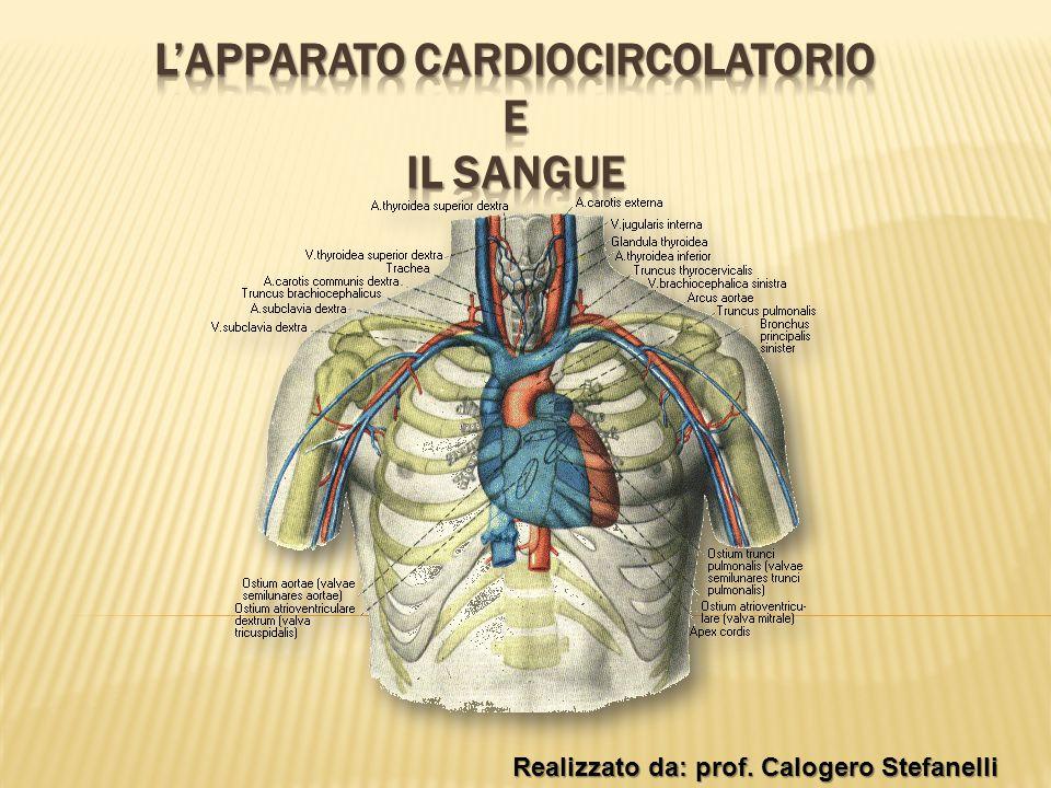 Realizzato da: prof. Calogero Stefanelli