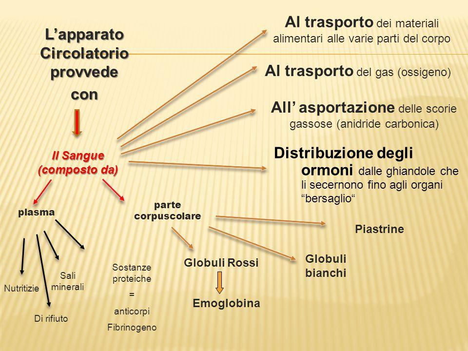 Al trasporto dei materiali alimentari alle varie parti del corpo Al trasporto del gas (ossigeno) All' asportazione delle scorie gassose (anidride carb