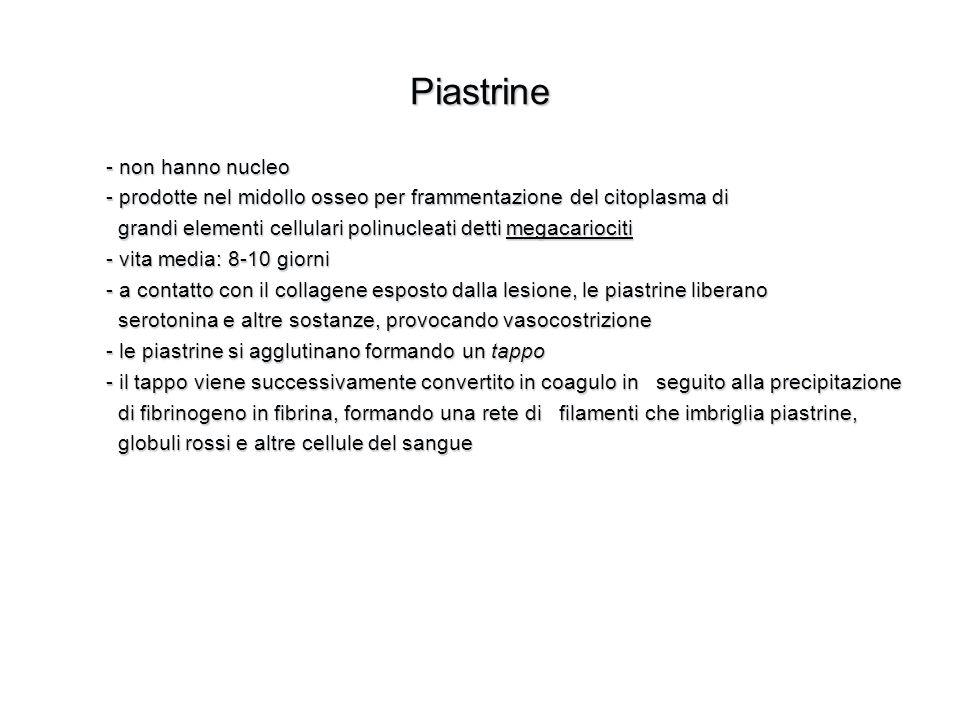 Piastrine - non hanno nucleo - prodotte nel midollo osseo per frammentazione del citoplasma di grandi elementi cellulari polinucleati detti megacarioc