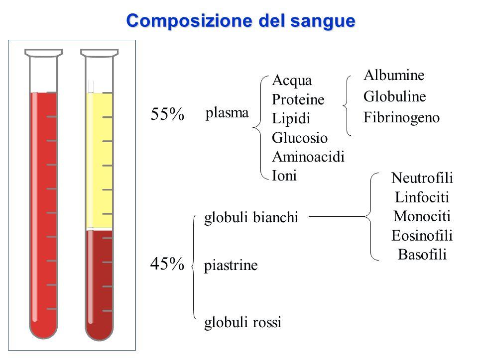 Composizione del sangue 55% 45% plasma globuli bianchi piastrine globuli rossi Acqua Proteine Lipidi Glucosio Aminoacidi Ioni Albumine Globuline Fibri