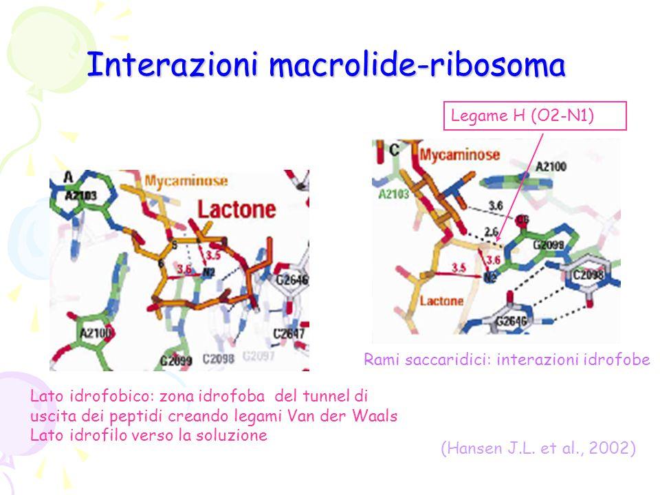 Interazioni macrolide-ribosoma Legame H (O2-N1) (Hansen J.L. et al., 2002) Lato idrofobico: zona idrofoba del tunnel di uscita dei peptidi creando leg