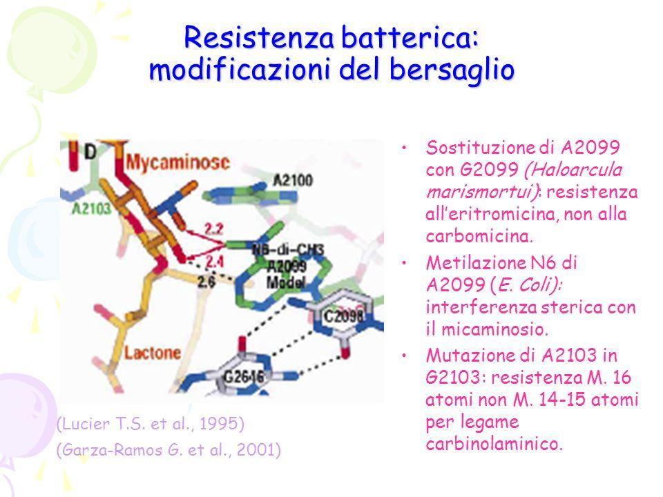 Resistenza batterica: modificazioni del bersaglio Sostituzione di A2099 con G2099 (Haloarcula marismortui): resistenza all'eritromicina, non alla carb
