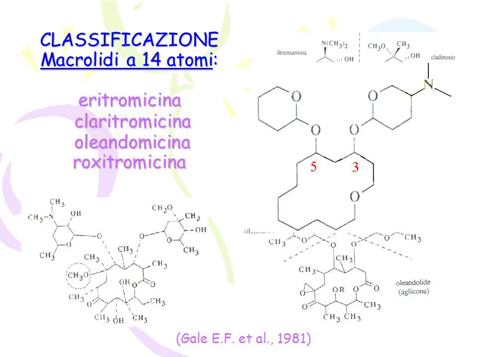 CLASSIFICAZIONE Macrolidi a 14 atomi: eritromicina claritromicina oleandomicina roxitromicina (Gale E.F. et al., 1981)