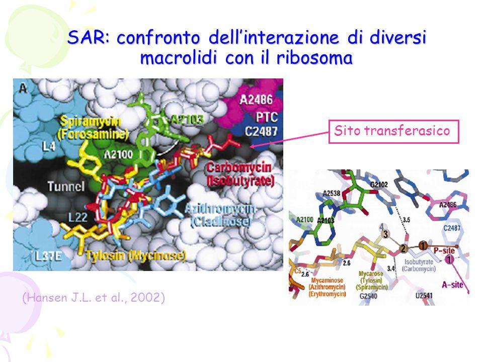 SAR: confronto dell'interazione di diversi macrolidi con il ribosoma (Hansen J.L. et al., 2002) Sito transferasico