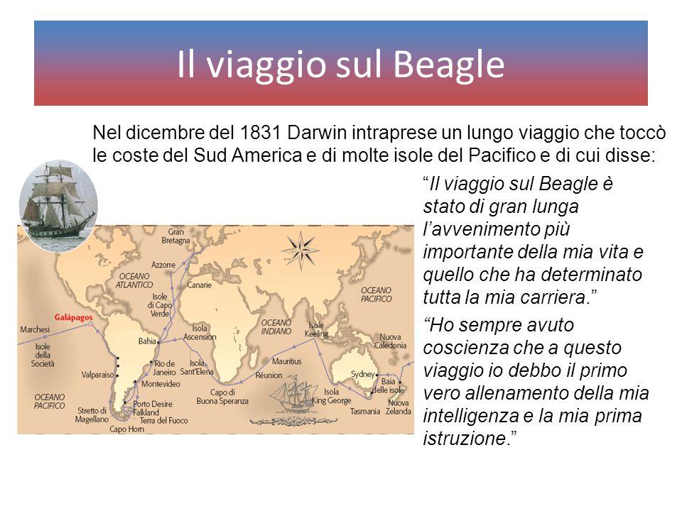 """Il viaggio sul Beagle """"Il viaggio sul Beagle è stato di gran lunga l'avvenimento più importante della mia vita e quello che ha determinato tutta la mi"""