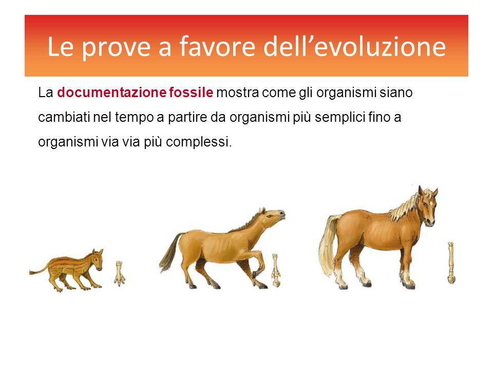 Le prove a favore dell'evoluzione La documentazione fossile mostra come gli organismi siano cambiati nel tempo a partire da organismi più semplici fin