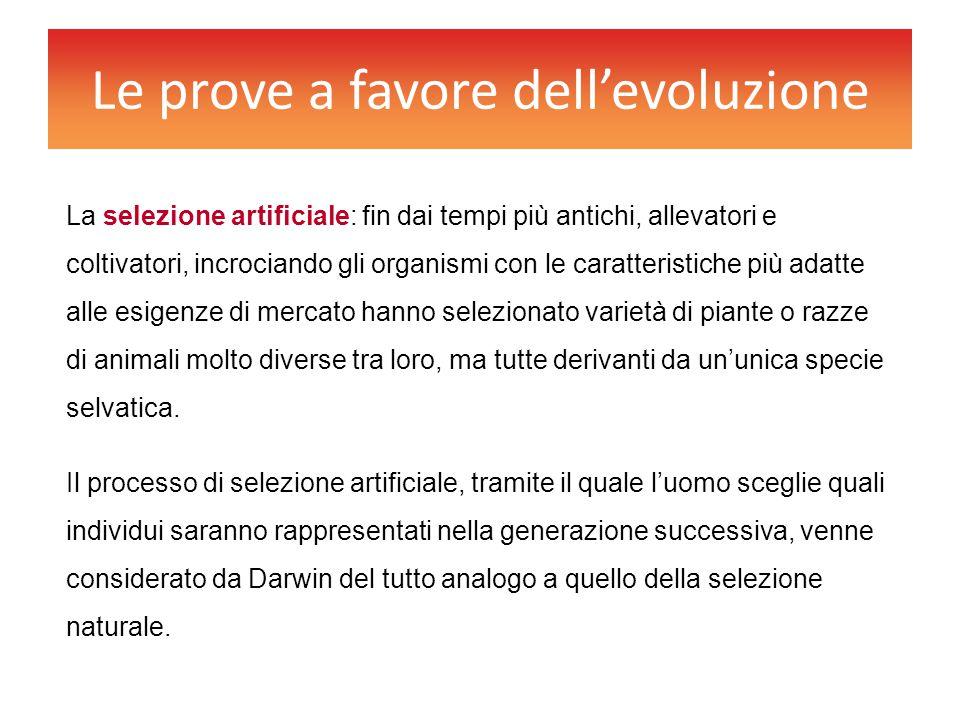 Le prove a favore dell'evoluzione La selezione artificiale: fin dai tempi più antichi, allevatori e coltivatori, incrociando gli organismi con le cara