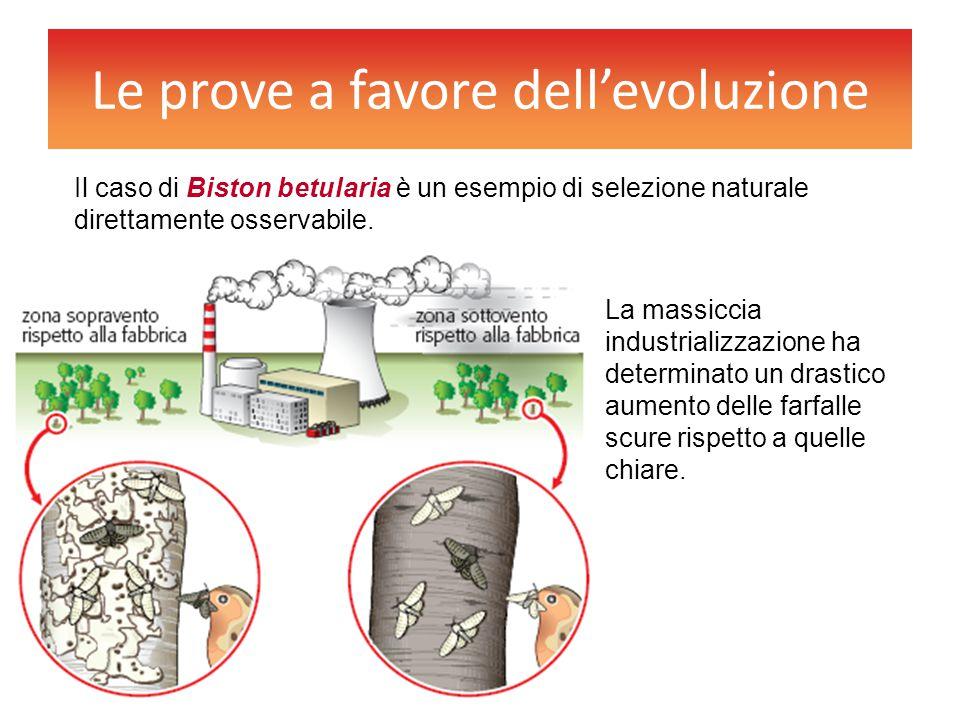 Le prove a favore dell'evoluzione Il caso di Biston betularia è un esempio di selezione naturale direttamente osservabile. La massiccia industrializza