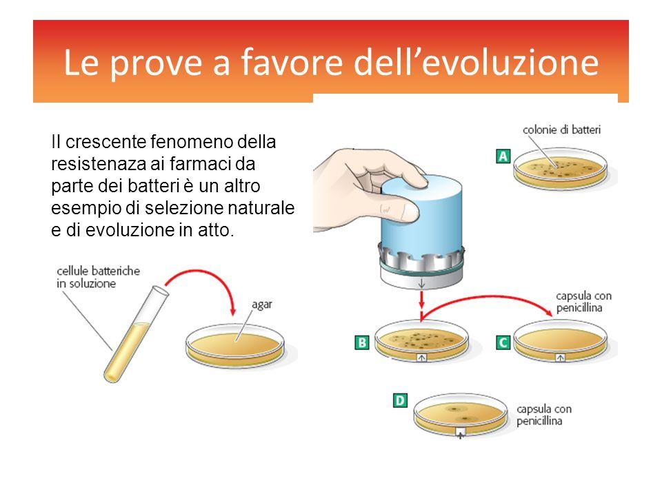 Le prove a favore dell'evoluzione Il crescente fenomeno della resistenaza ai farmaci da parte dei batteri è un altro esempio di selezione naturale e d